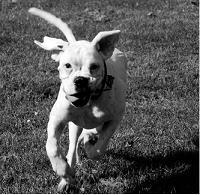 Thumbnail image for Hundephobie – Wenn der Gang durch den Park zum Albtraum wird